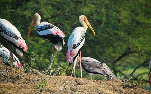 Bharatpur Bird Sanctuary (Keoladeo Ghana National Park)