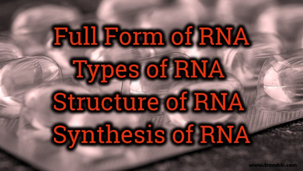 Full Form of RNA - Structure of RNA - Synthesis of RNA