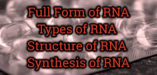 Full Form of RNA – Structure of RNA – Synthesis of RNA