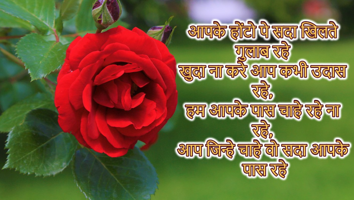 Happy Rose Day Images Wallpaper with Wishes