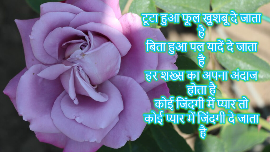 rose day shayari hindi